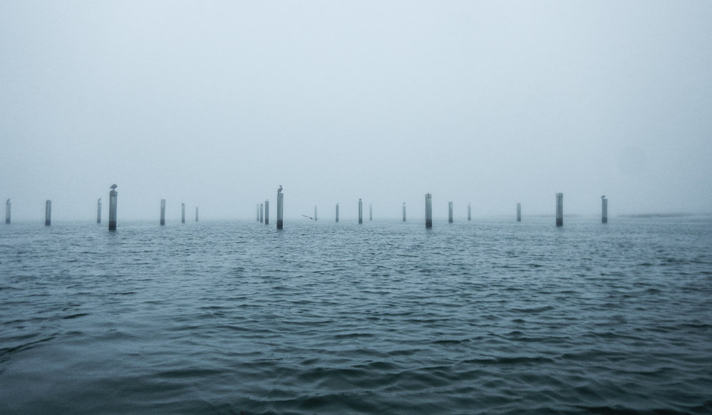 Skull Creek Pilings In The Fog