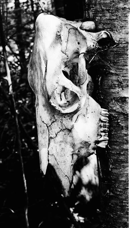 Skull Lane